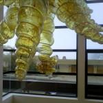 GOLDEN SEA SHELLS